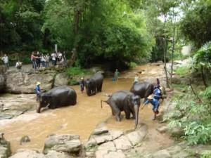 Chiang Mai Elephant Camp - Thailand Elephants