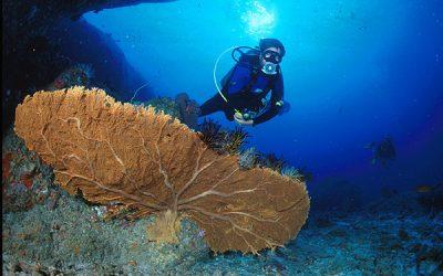 Alison – Scuba Diving Khao Lak