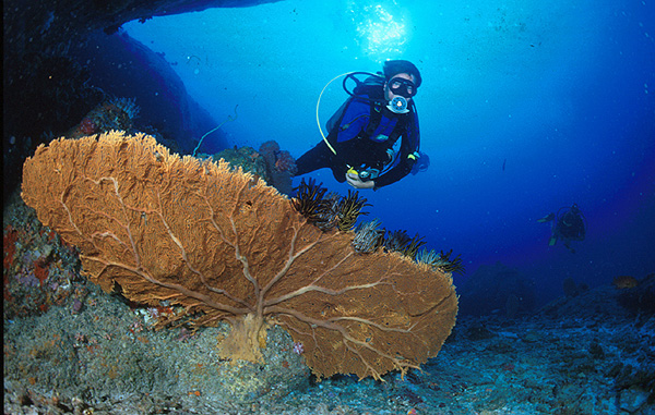 Activities in Thailand - Scuba Diving