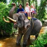 Elephant Trekking on Koh Samui City Tours