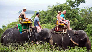Phuket Activities - Elephant Trekking Phuket