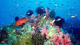 Koh Samui Activities - Koh Samui Diving