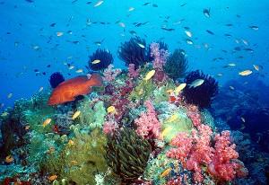 Scuba Diving Koh Samui