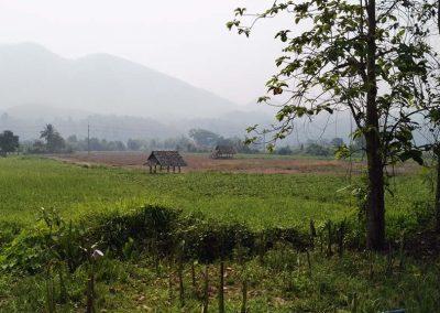Chiang Mai - Mae Hong Son - ricefield and mountains