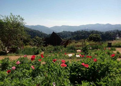 Chiang Mai ,Mon Cham - flowers and mountains