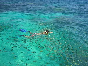 Koh Lanta Phi Phi Tour Snorkeling Fish