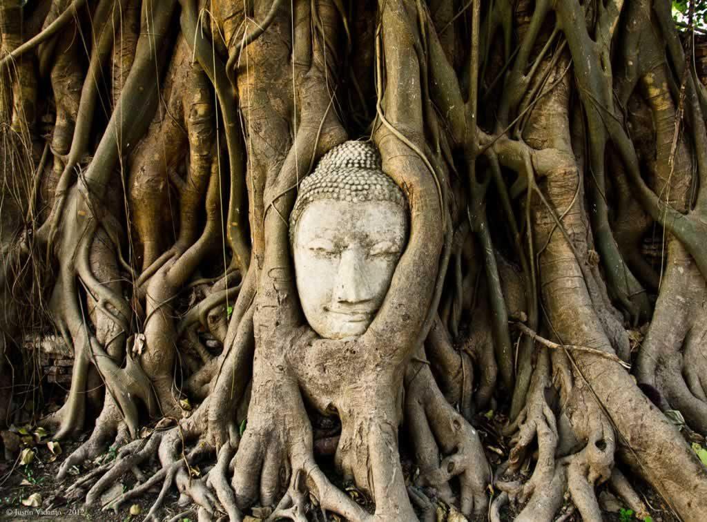 Buddha Head - Wat Mamathat