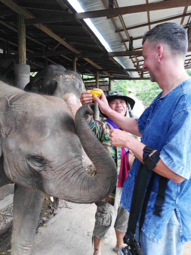 chiang mai, elephant camp - elephant feed
