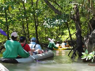 Sea Canoeing in Phang Nga Bay