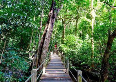 Nature trail - Than Bok Khorani National Park