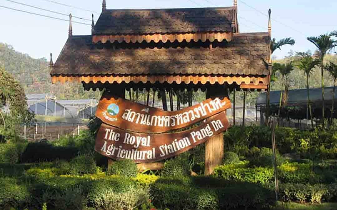 The Royal Agricltural Station Pang Da